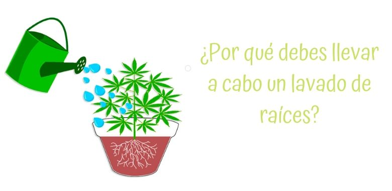 Grow shop online lavado_raices_cabecera